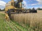 mark lea harvest 2020.jpg