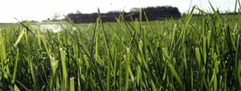 grass_ru_report_350.jpg