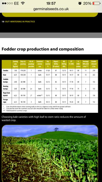 Ewe winter forage   The Farming Forum