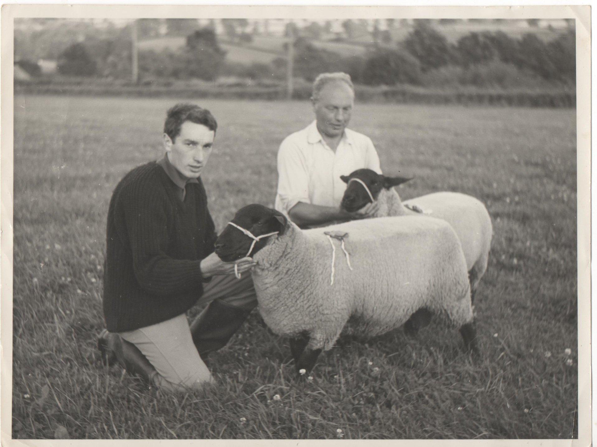 Suffolk Ram | The Farming Forum