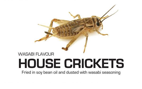 1716_edible_bugs_house_house_crickets.jpg
