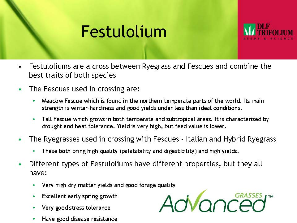 Festulolium Presentation 2013_Page_1.jpg