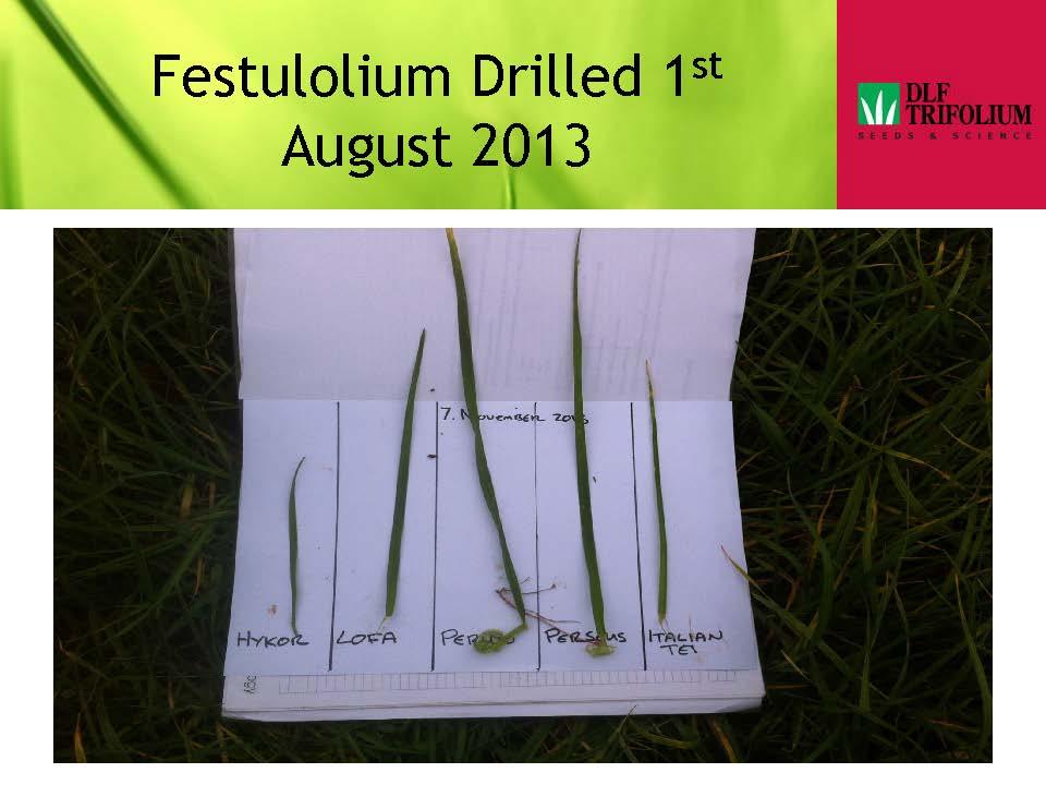 Festulolium Presentation 2013_Page_6.jpg