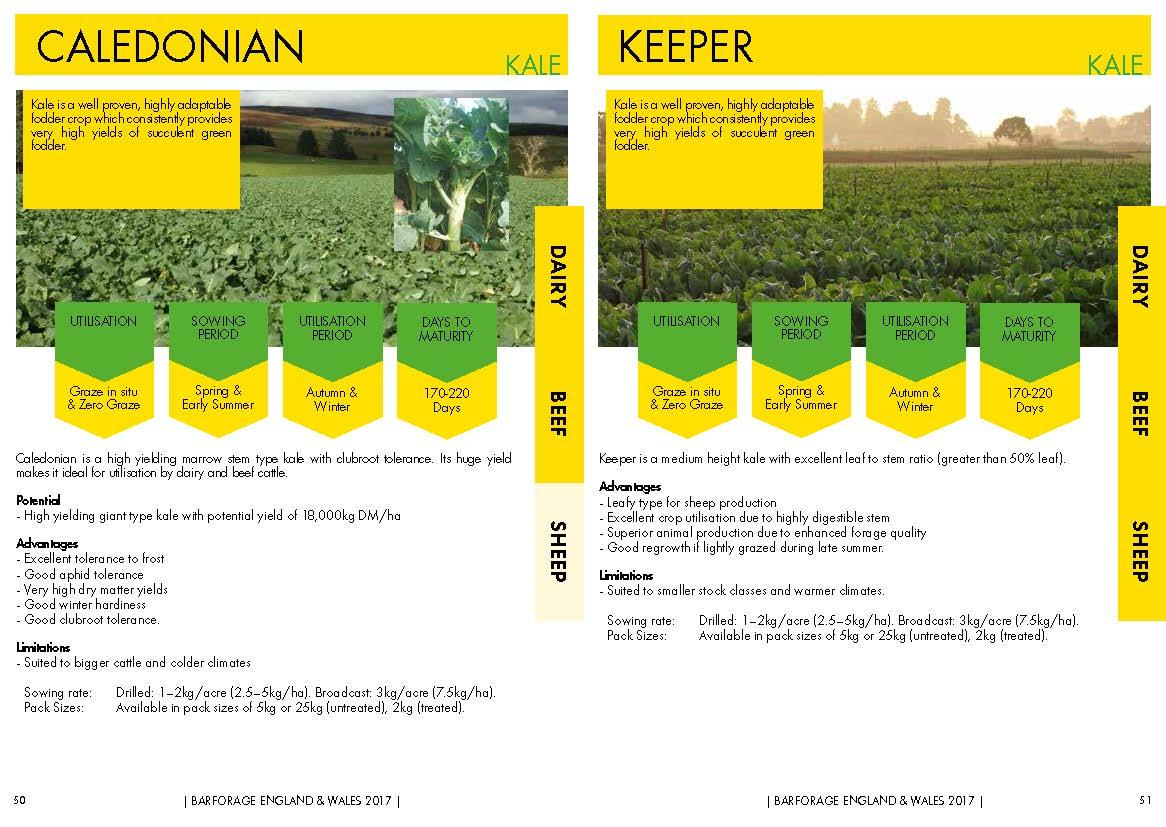 Caledonian & Keeper Kale.jpg