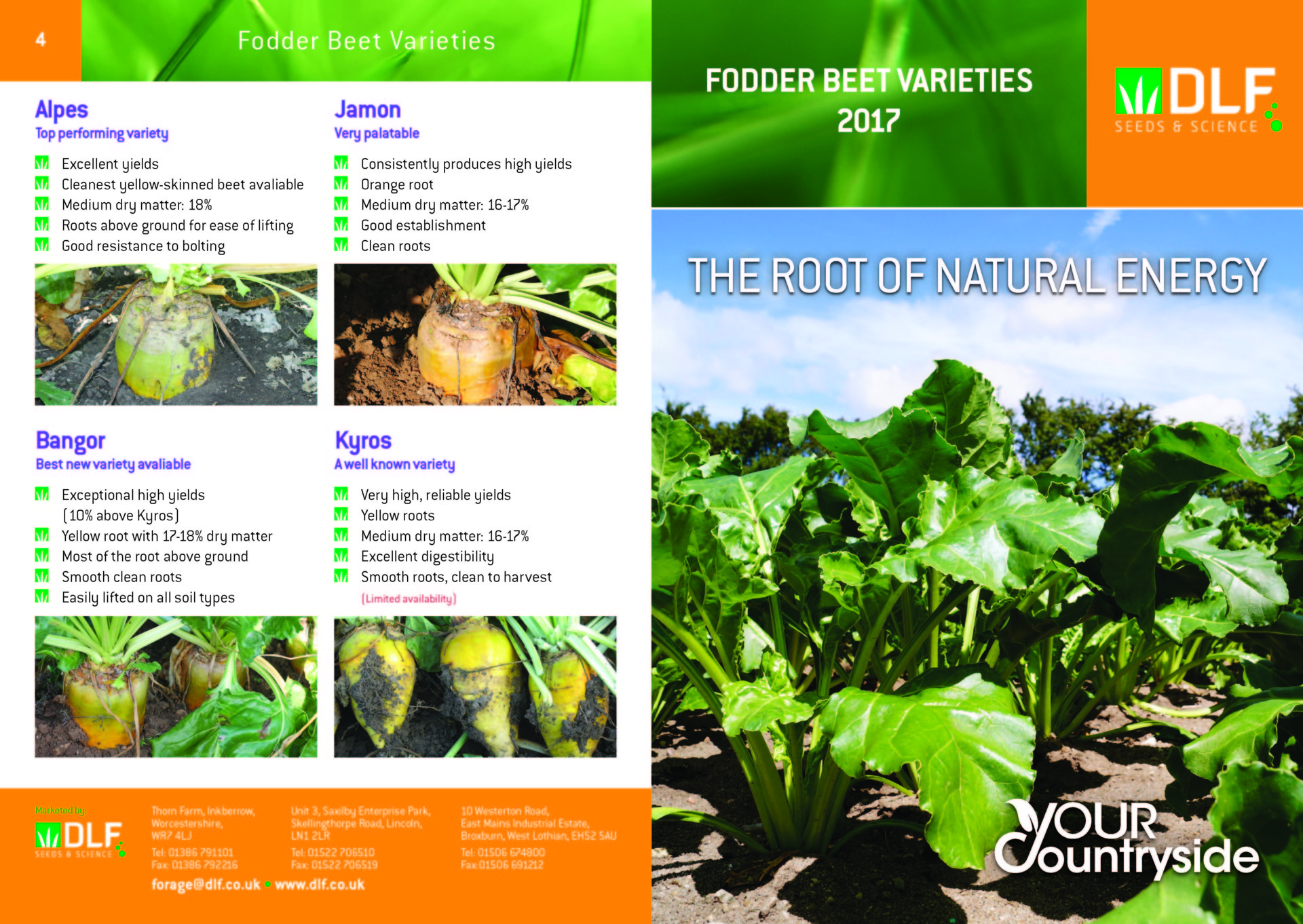 DLF Fodder Beet Varieties 2017 Leaflet Final_Page_1.jpg