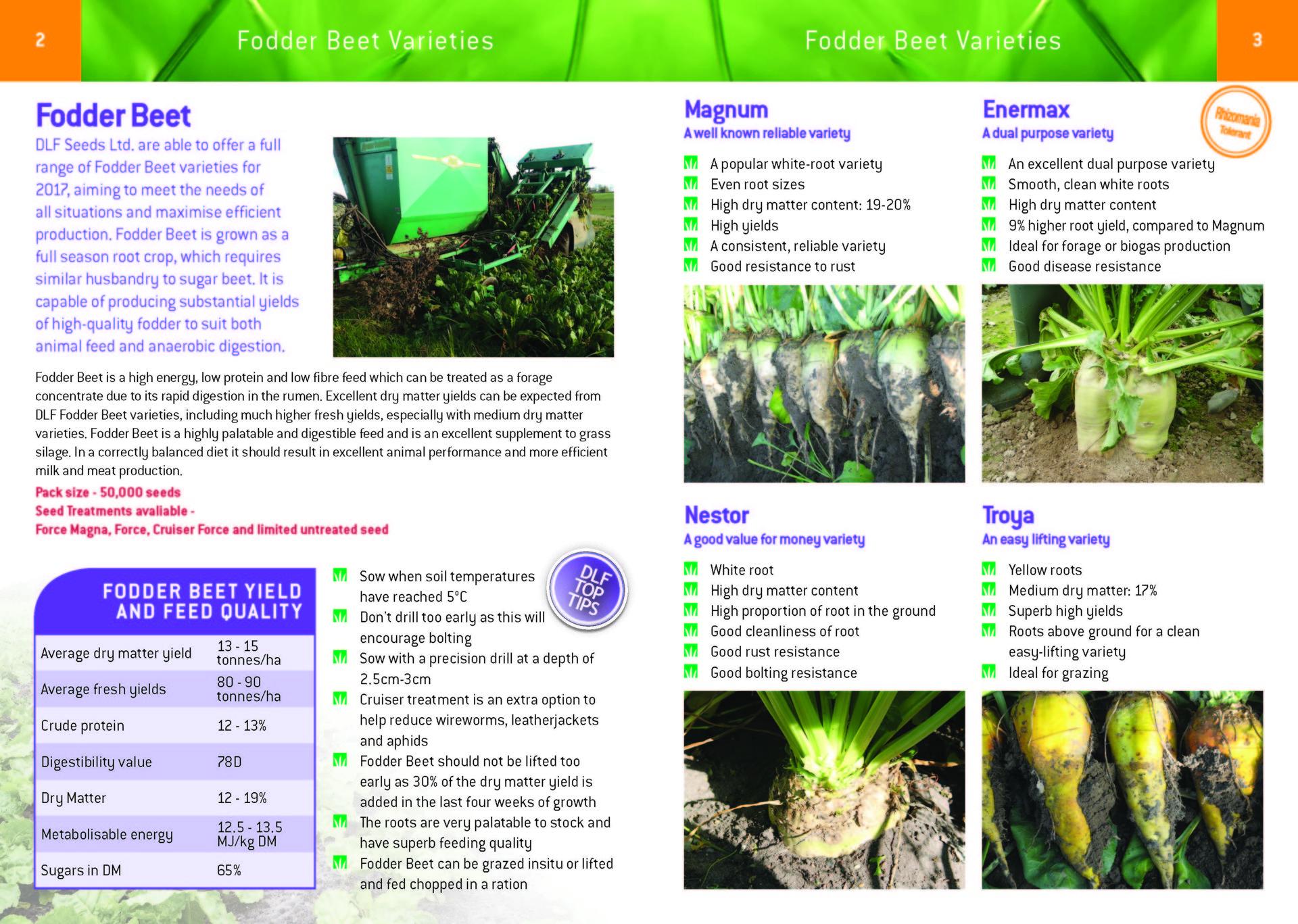 DLF Fodder Beet Varieties 2017 Leaflet Final_Page_2.jpg