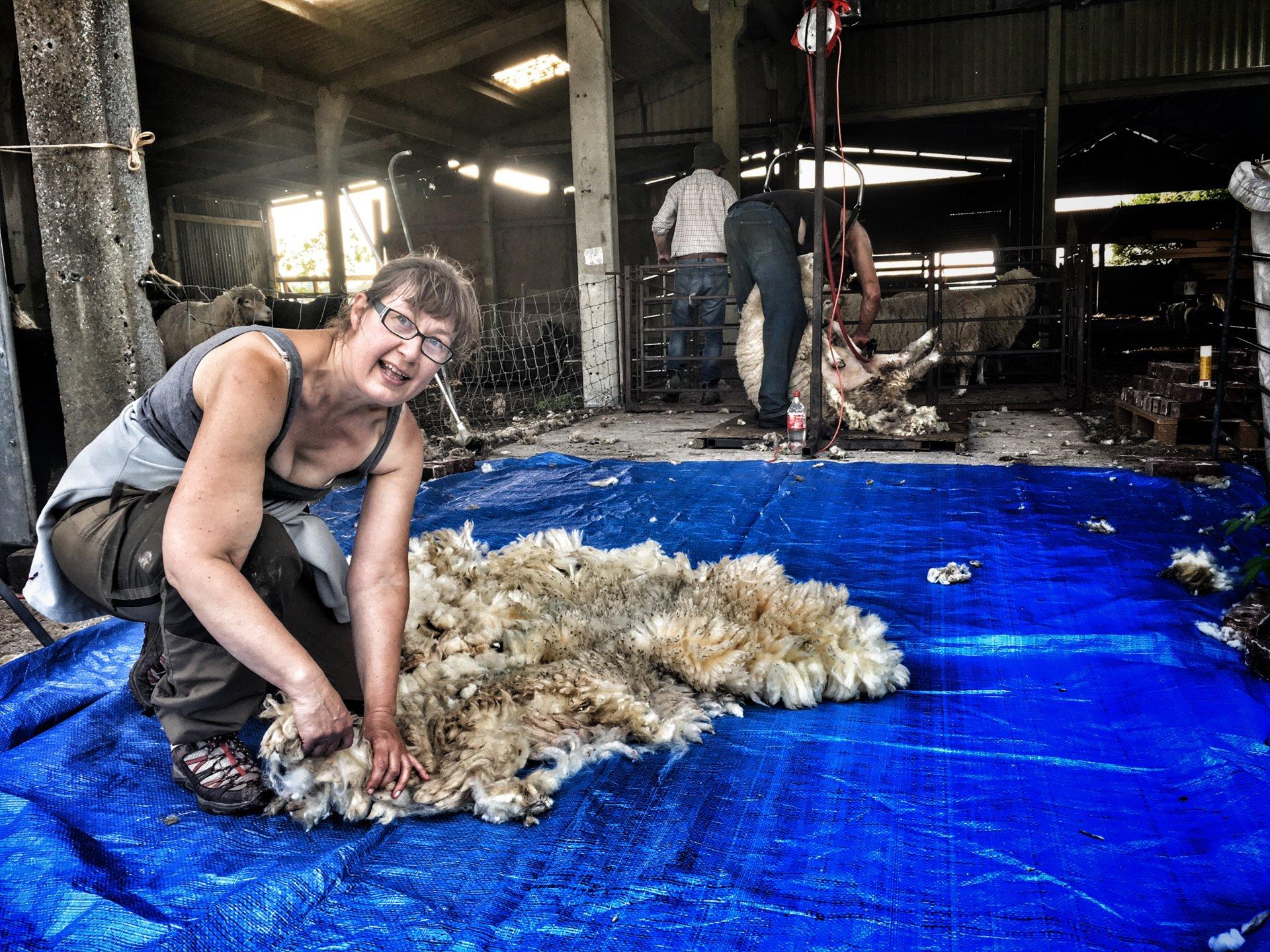 shearing 18 5.jpg