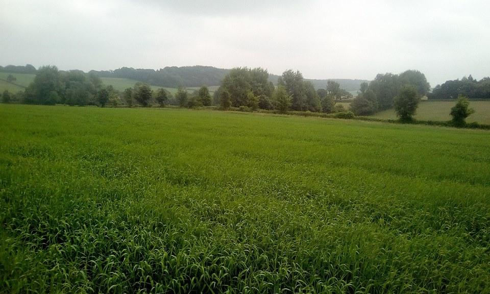 8 acres.jpg