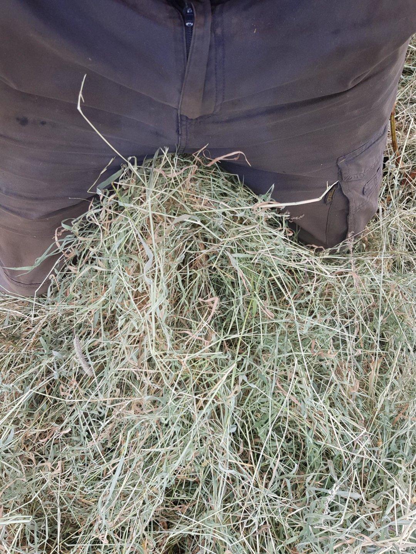 hay to balls.jpg