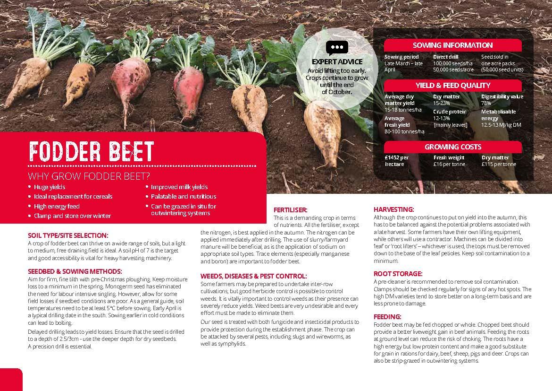 Fodder Beet Guide_Page_1.jpg