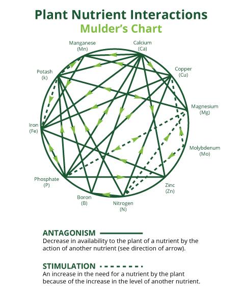 Plant nutrients Mulder's Chart.jpg
