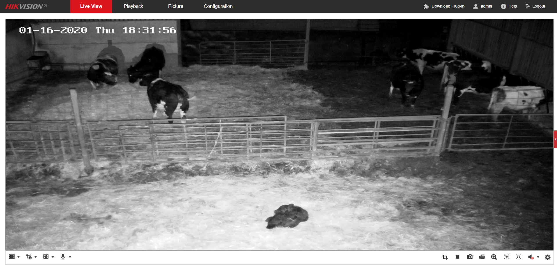 hikvision ptz night calves 2020.png