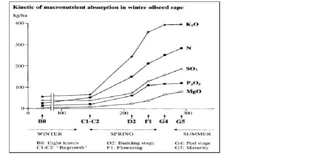 OSR nutrient needs vs growth stage.jpg