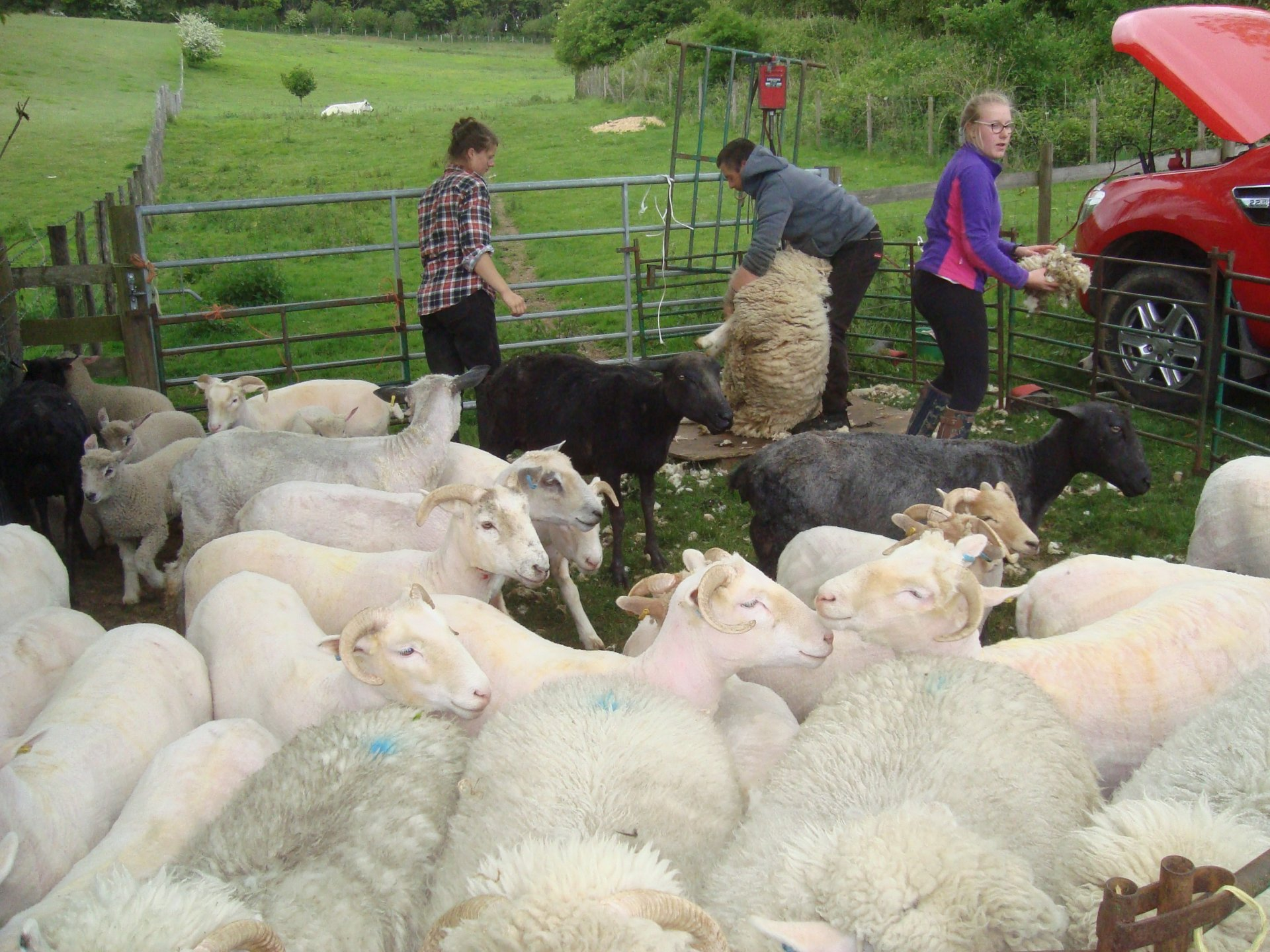 shearing 20 4.jpg