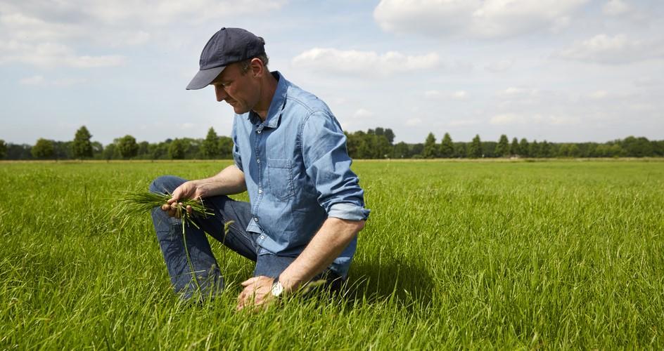 Make your grassland fertiliser work harder