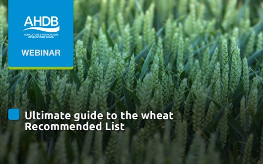 Ultimate guide to the wheat Recommended List.jpg