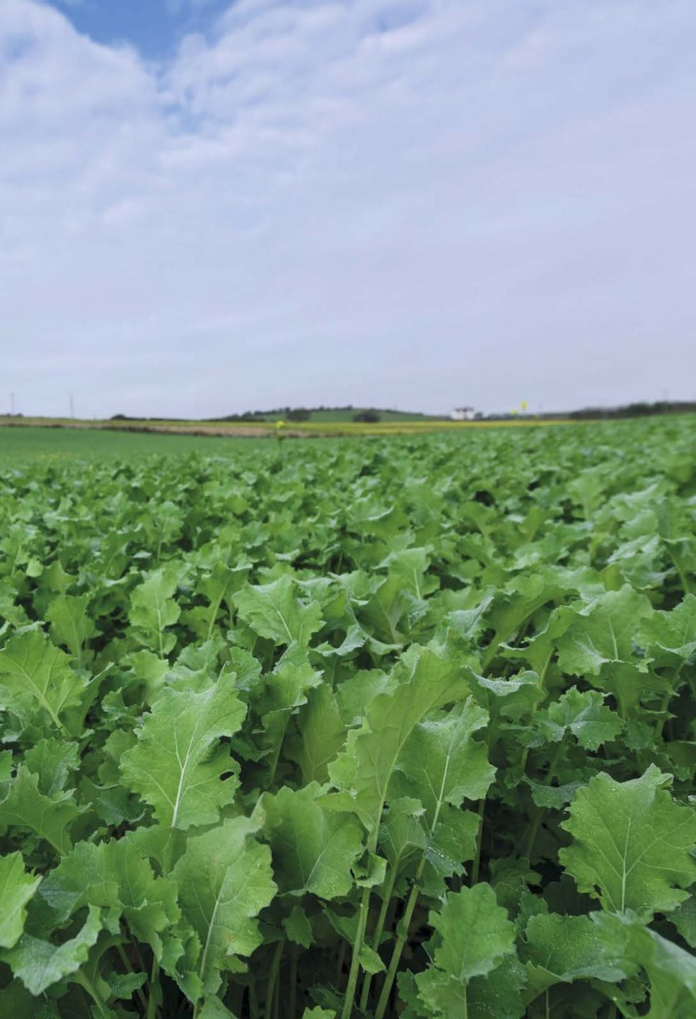 GGB_AGRI_107_Brassica_Growers_guide_2020_Page_02.jpg