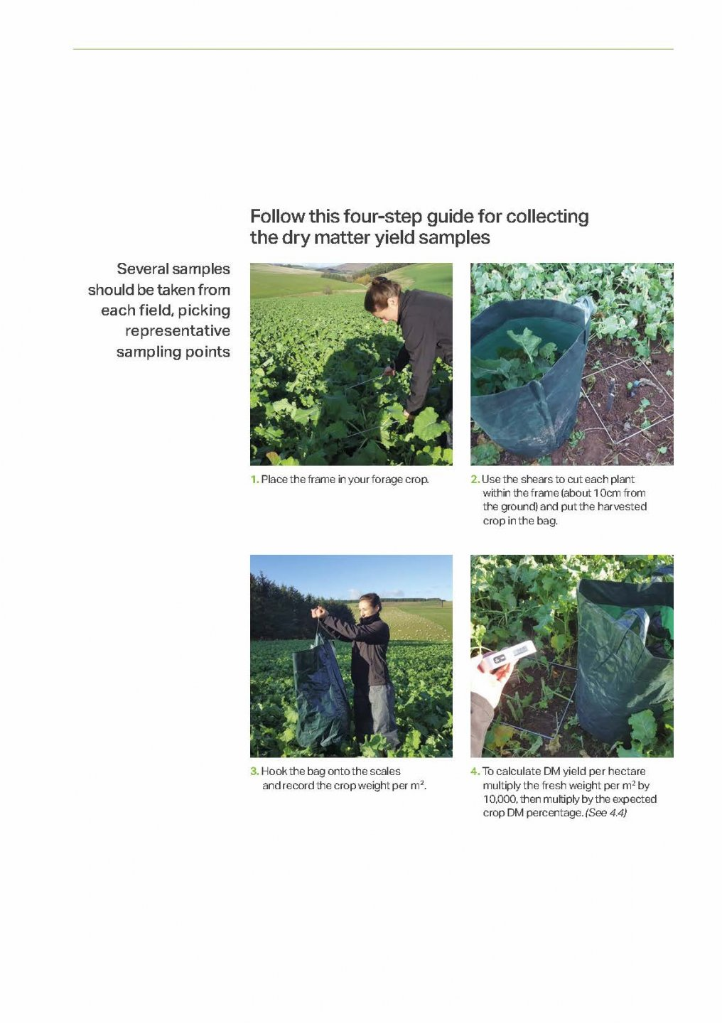 GGB_AGRI_107_Brassica_Growers_guide_2020_Page_12.jpg