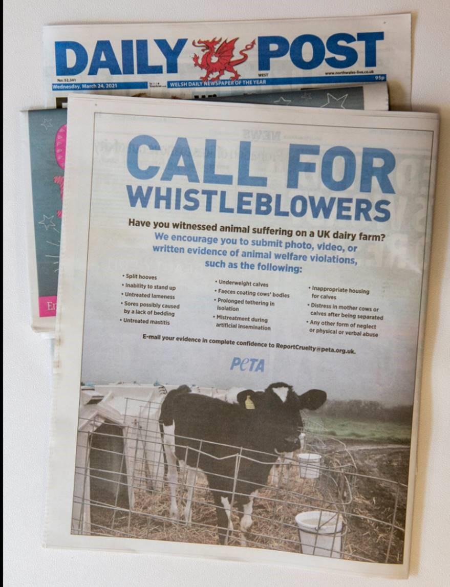 PETA advert.jpg