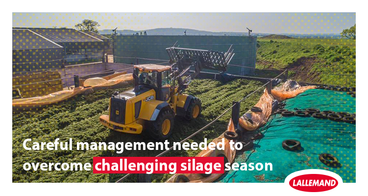 Careful management needed to overcome challenging silage season.jpg