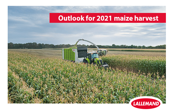 outlook for maize harvest.png