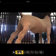 Livestockbreeder101