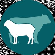 Ruminant Health & Welfare