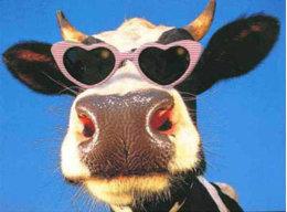 Holsteinfriesian90